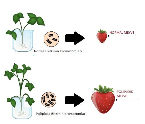 polyploidy in plant breeding pdf