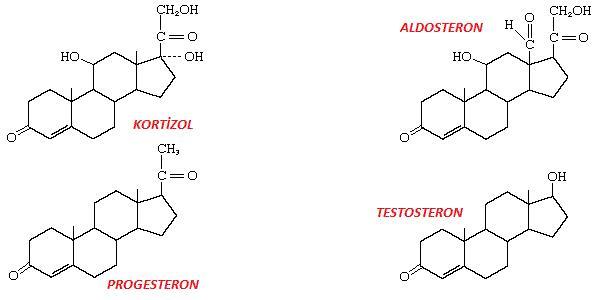 steroidler biyoloji